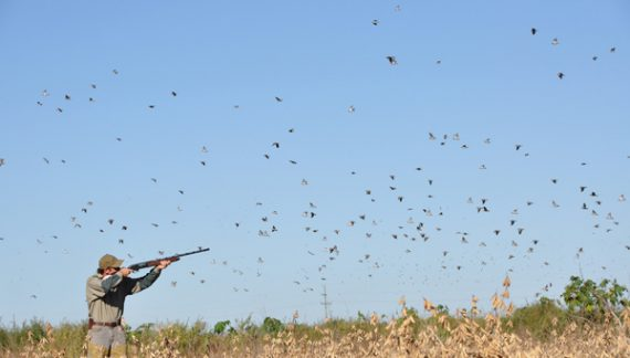 Attention Dove Hunters – Changes To This Season's Limits