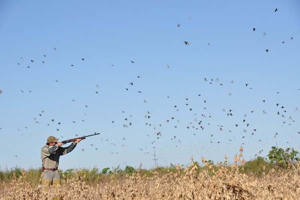 Changes to Dove Limits Explored