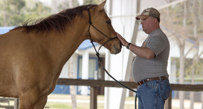 Lander Univ. to Offer Equine Therapy to Veterans with PTSD