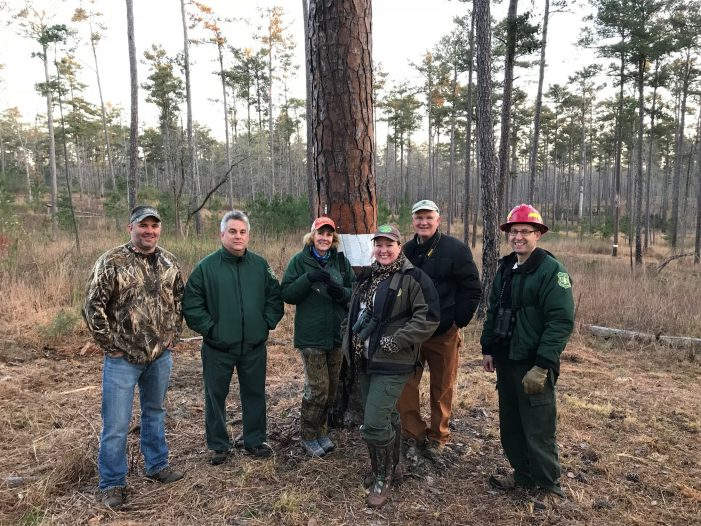 Red-cockaded Woodpecker Released (RCW) Released at Lick Fork Lake