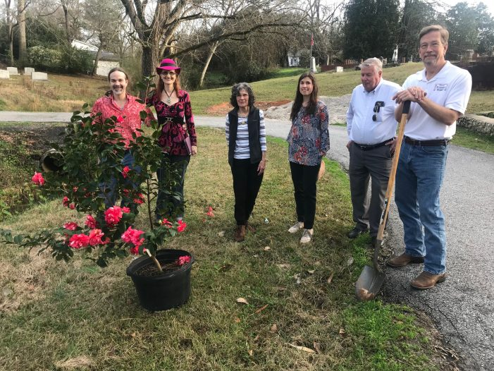 Camellia Planted in Willowbrook