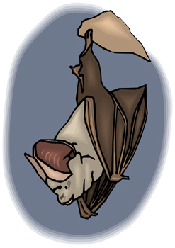 Rabid Bat Confirmed in Aiken County; One Human Exposure