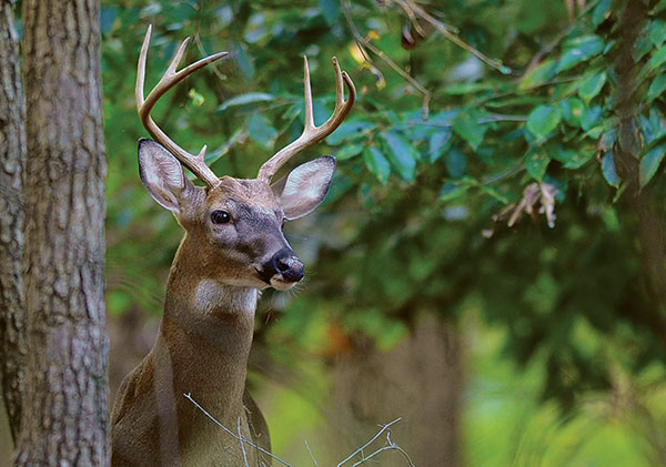 Tips for properly and ethically disposing of deer remains