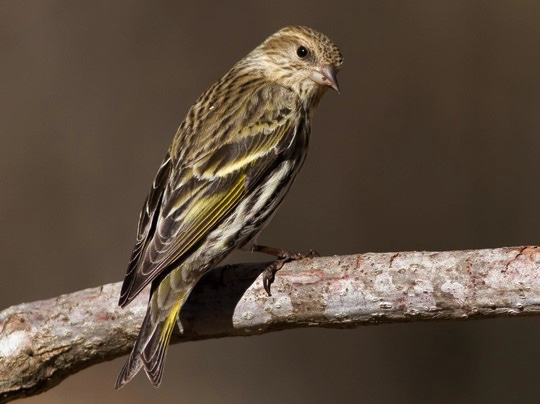 SCDNR asks South Carolinians to remove bird feeders until early spring